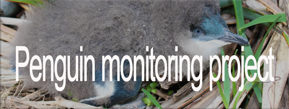 National Little Blue Penguin Monitoring